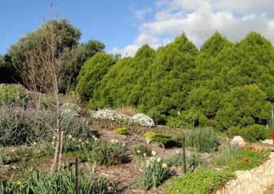 The Olives Gardens07